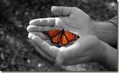butterfly_thumb.jpg